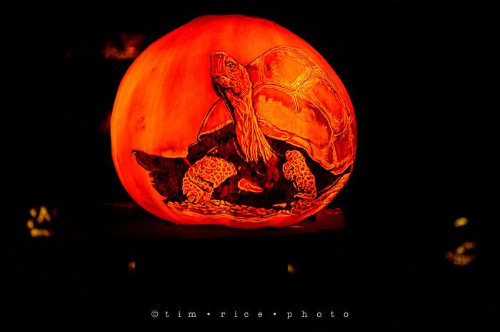 Yr7•037-365•2204•Jack O'Lantern Spectacular