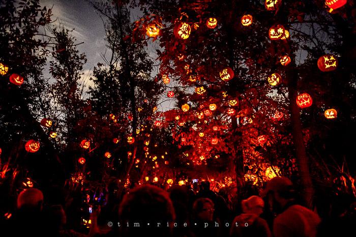 Yr7•039-365•2204•Jack O'Lantern Spectacular
