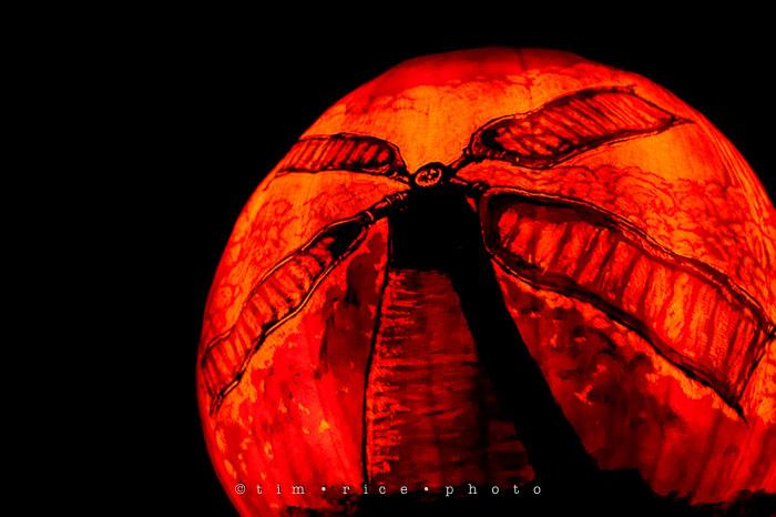 Yr7•042-365•2204•Jack O'Lantern Spectacular