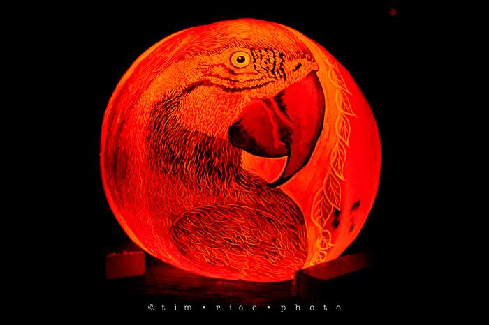 Yr7•052-365•2204•Jack O'Lantern Spectacular