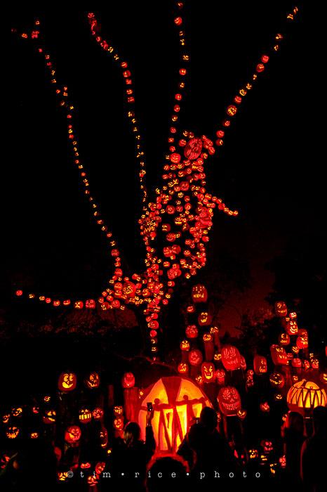 Yr7•081-365•2204•Jack O'Lantern Spectacular