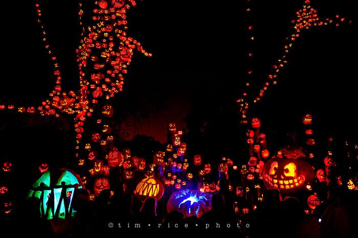 Yr7•082-365•2204•Jack O'Lantern Spectacular