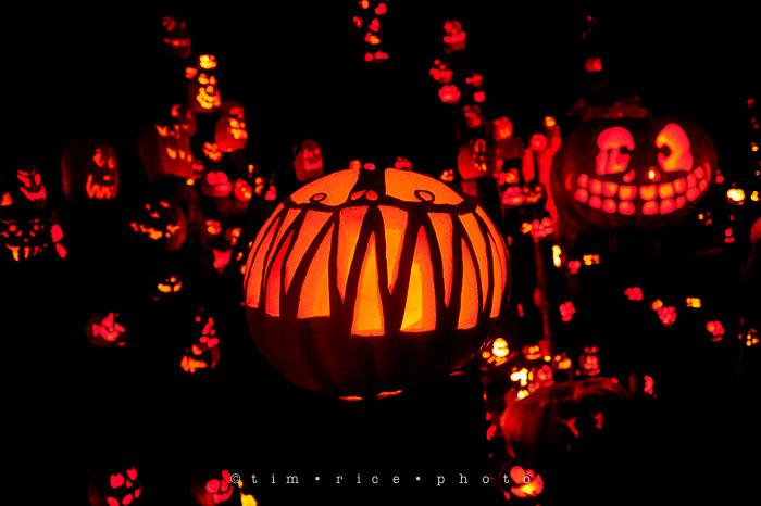 Yr7•083-365•2204•Jack O'Lantern Spectacular