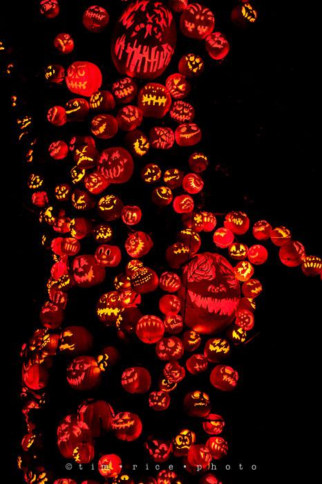Yr7•084-365•2204•Jack O'Lantern Spectacular