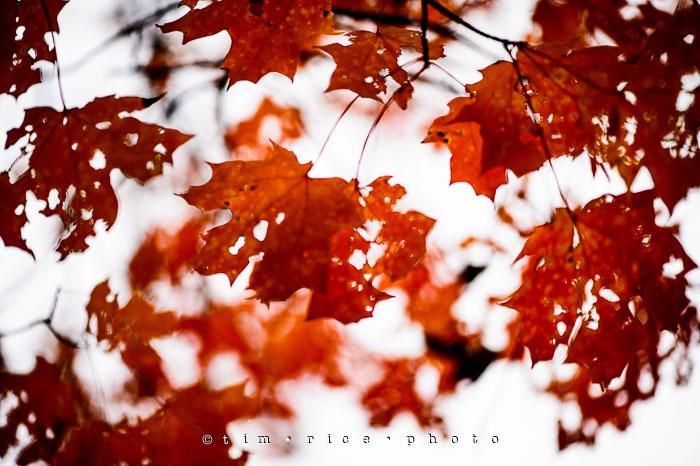 Yr7•033-365•2224•Autumn Leaves