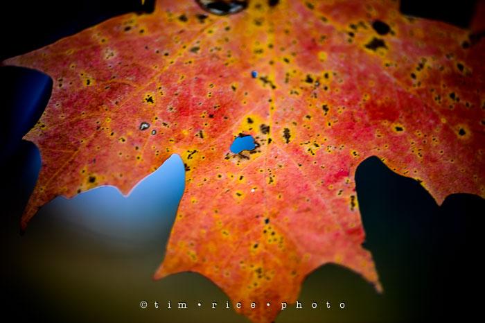 Yr7•034-365•2224•Autumn Leaves