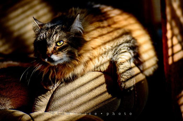 Yr7•097/366•2288 Moody Cat January 5, 2016