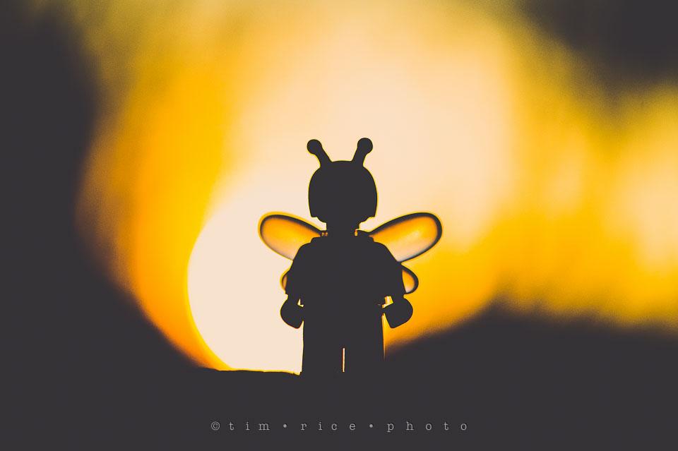 Yr7•159-366•2350•Bee Happy