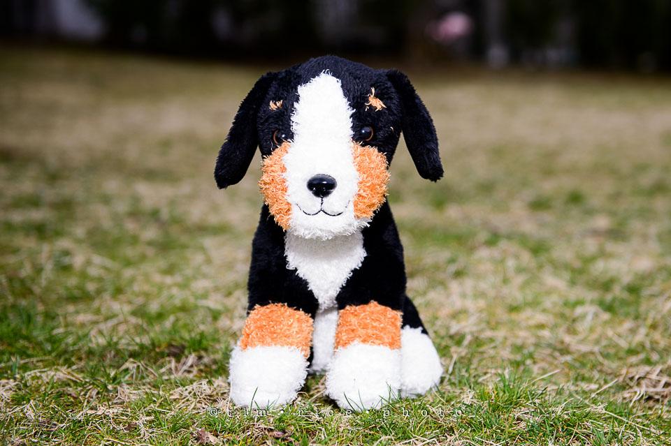 Yr7•175-366•2365•Puppy Day