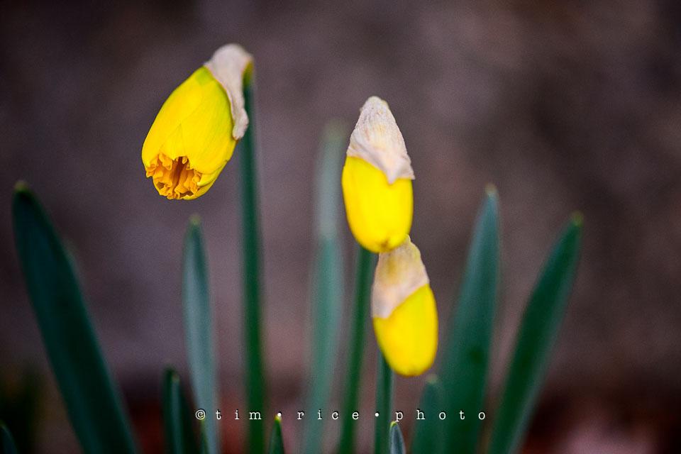 Yr7•181-366•2370•Easter Flowers