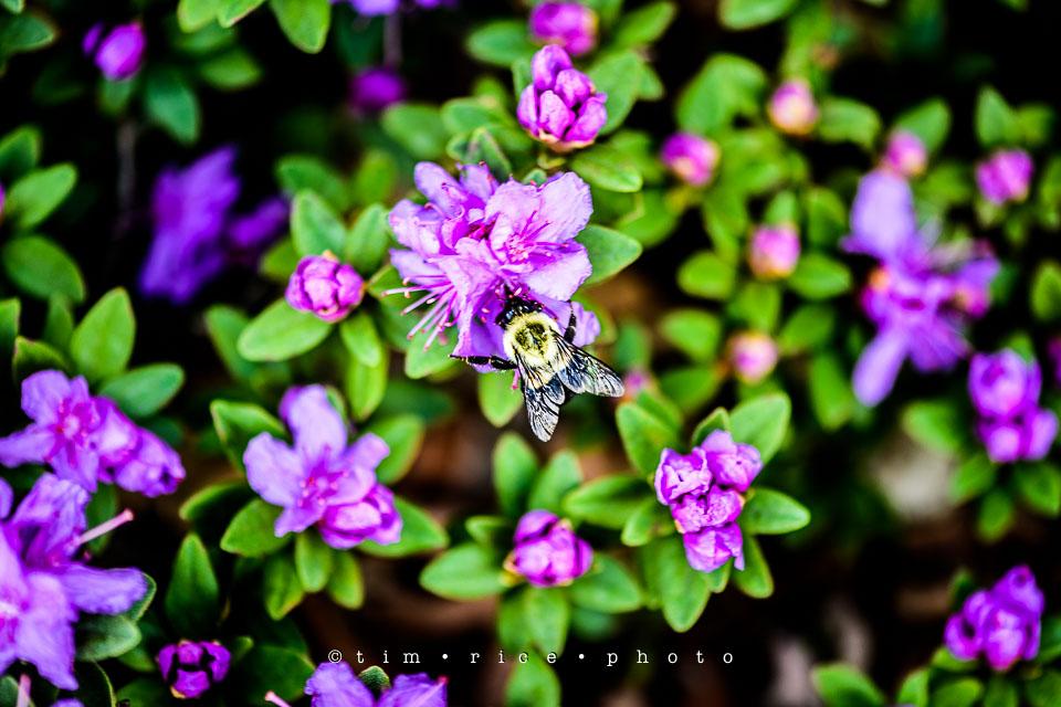 Yr7•221-366•2412•Spring Purple