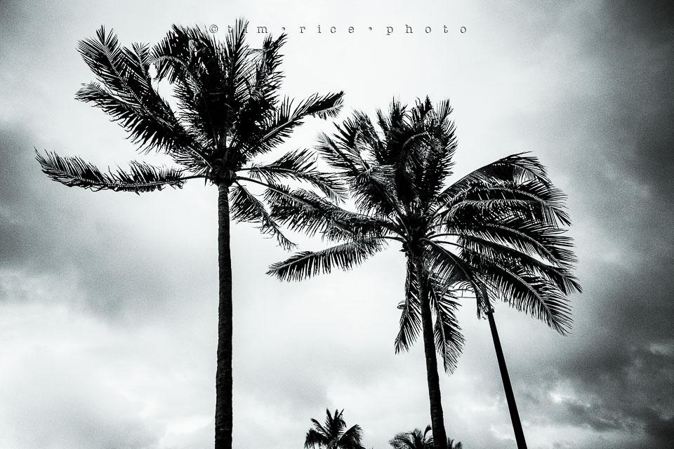 Yr7•230-366•2421•FLA Storm