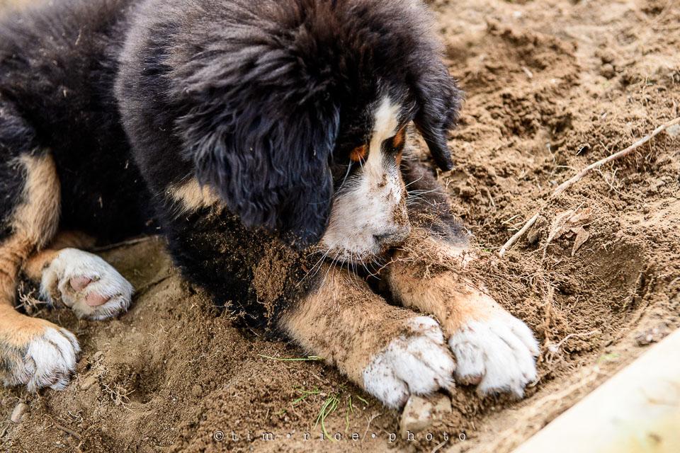 Yr7•237-366•2428•Wasn't Digging