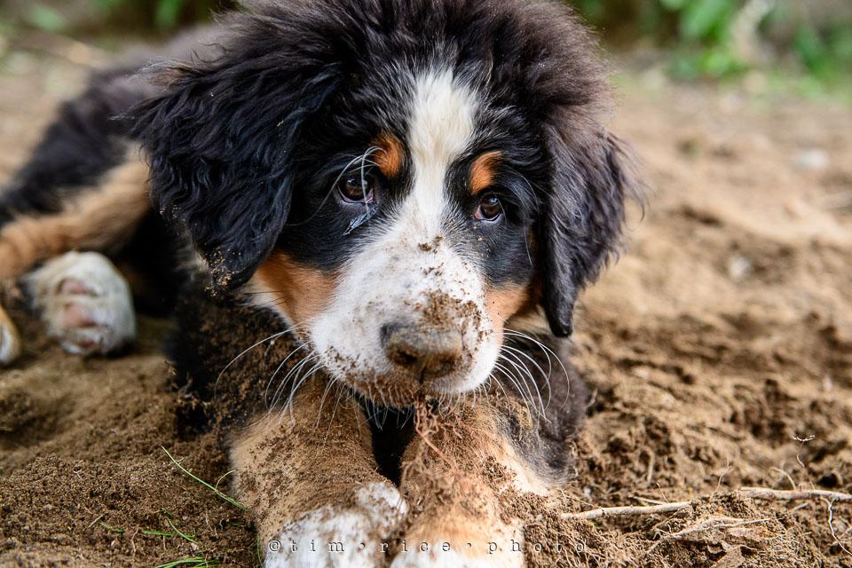 Yr7•238-366•2428•Wasn't Digging