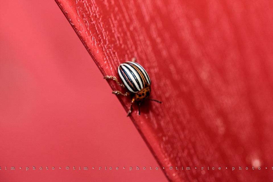 Yr7•261-366•2452•Bug On Line