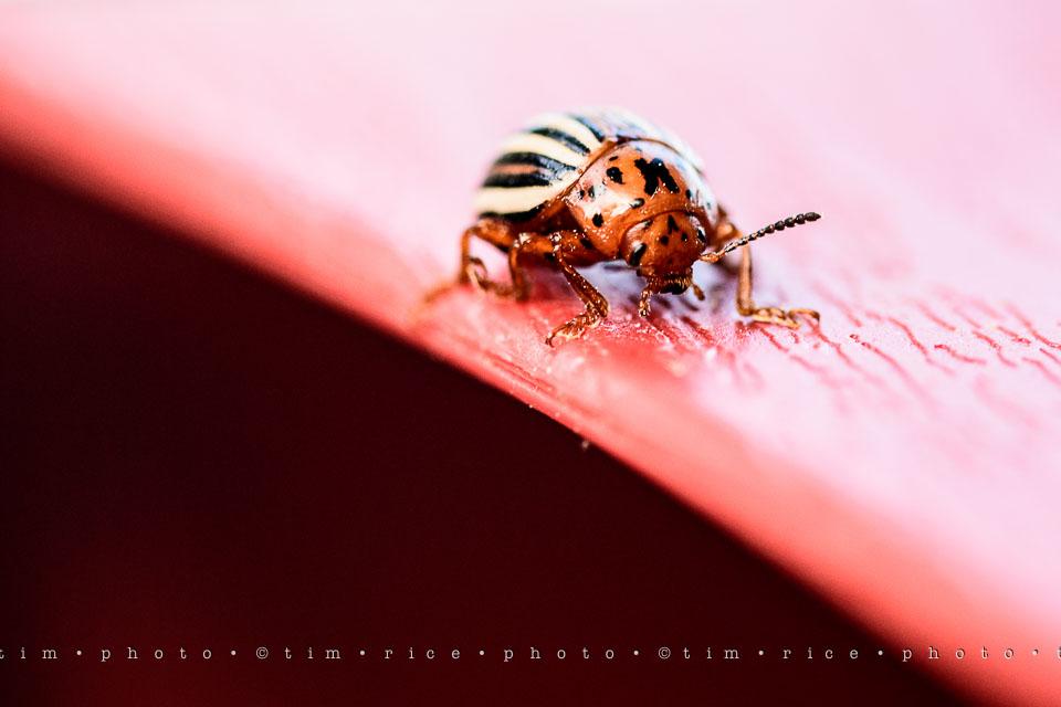 Yr7•262-366•2452•Bug On Line