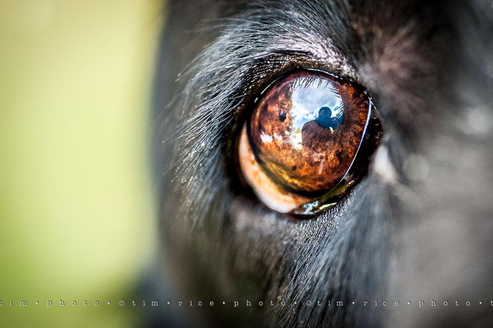 Yr7•264-366•2455•In a Dog's Eye