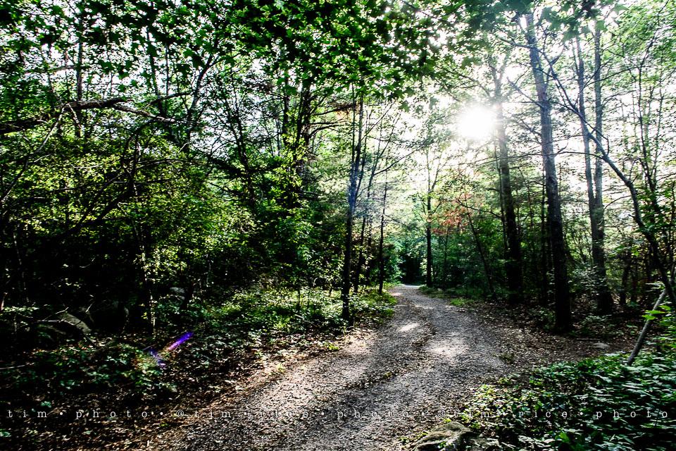 Yr7•288-366•2477•Medway Trail