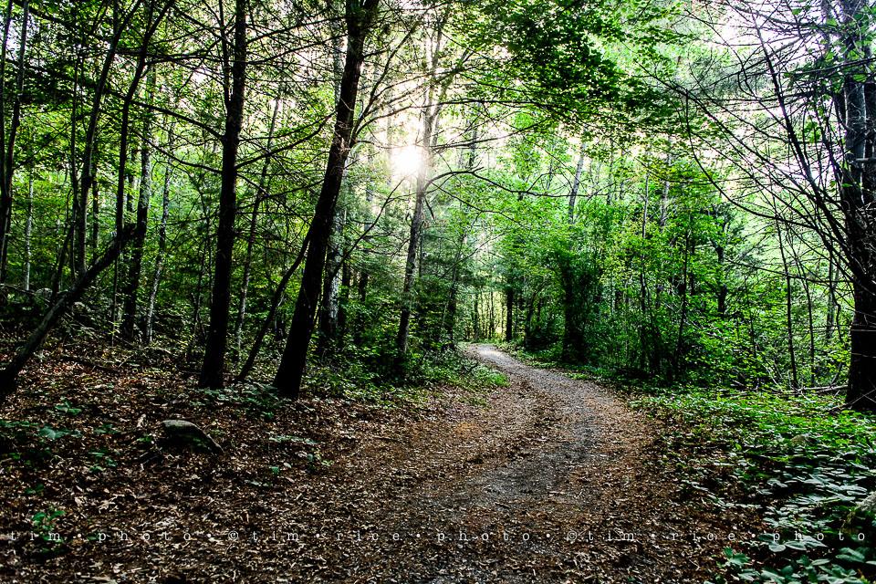 Yr7•289-366•2477•Medway Trail