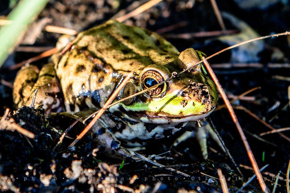 Yr7•303-366•2494•Frogger