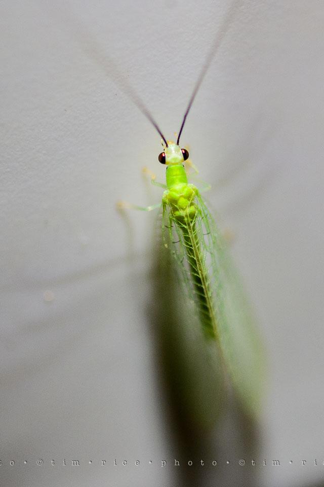 Yr7•313-366•2504•Glow Bug