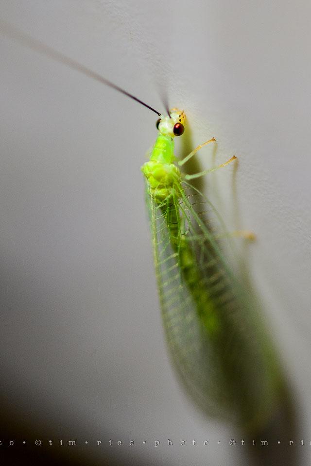 Yr7•314-366•2504•Glow Bug