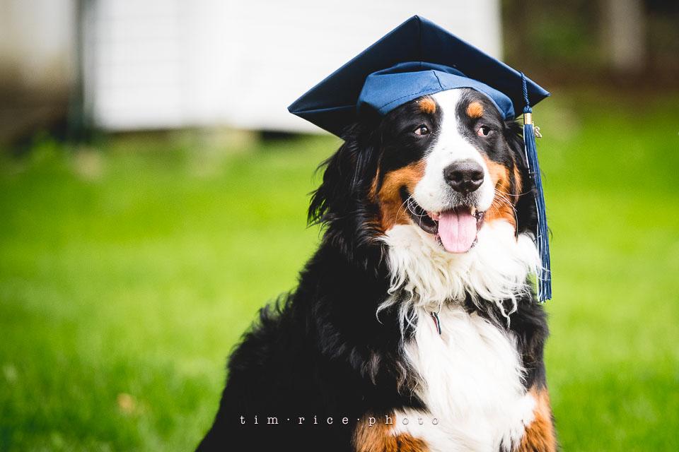 thedailypic•yr8•243/365•2800•Grad Dog