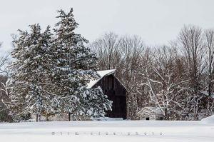 Yr4•004-365•Snow.jpg