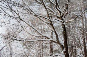 Yr4•005-365•Snow.jpg