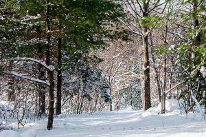 Yr4•006-365•Snow.jpg