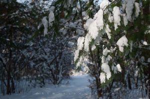 Yr4•007-365•Snow.jpg