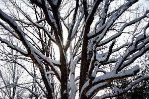 Yr4•008-365•Snow.jpg