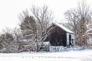 Yr4•009-365•Snow.jpg