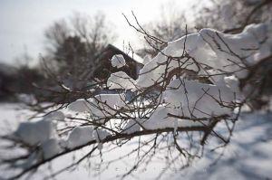 Yr4•010-365•Snow.jpg