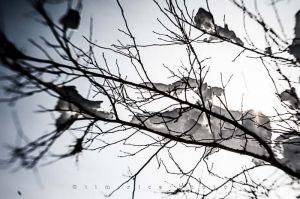 Yr4•011-365•Snow.jpg