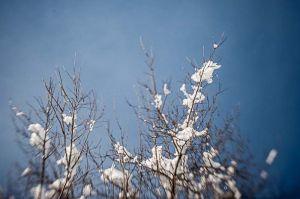 Yr4•015-365•Snow.jpg
