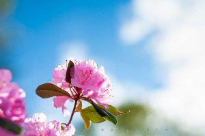 20120427-120427_Flowers_010.jpg