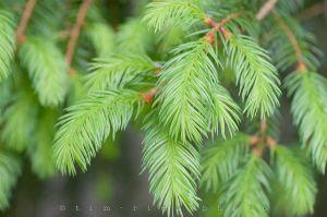 20120515-120515_Green2_068.jpg