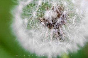 20120528-120528_TilliesFlowers_083.jpg