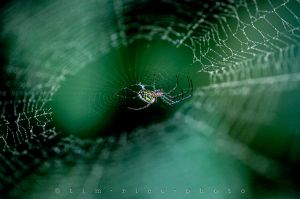 20120610-120527_Spider_012.jpg
