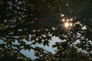 20120623-120621_SunHot_111.jpg