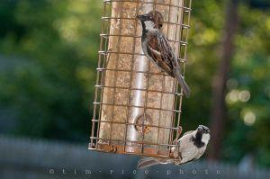 20110714-110714_BirdFeeder_036.jpg