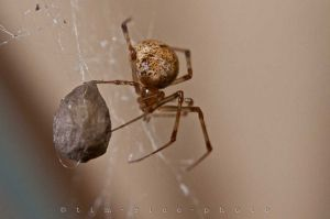 20110824-110824_Spider_064.jpg