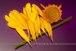 115-130121_Flowers_047.jpg