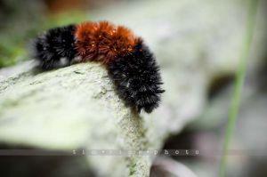 12-121007_Caterpillar_035.jpg