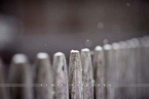 90-121229_Snow_326.jpg