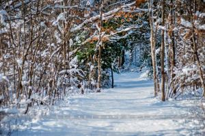 91-121230_SnowStorm_382.jpg